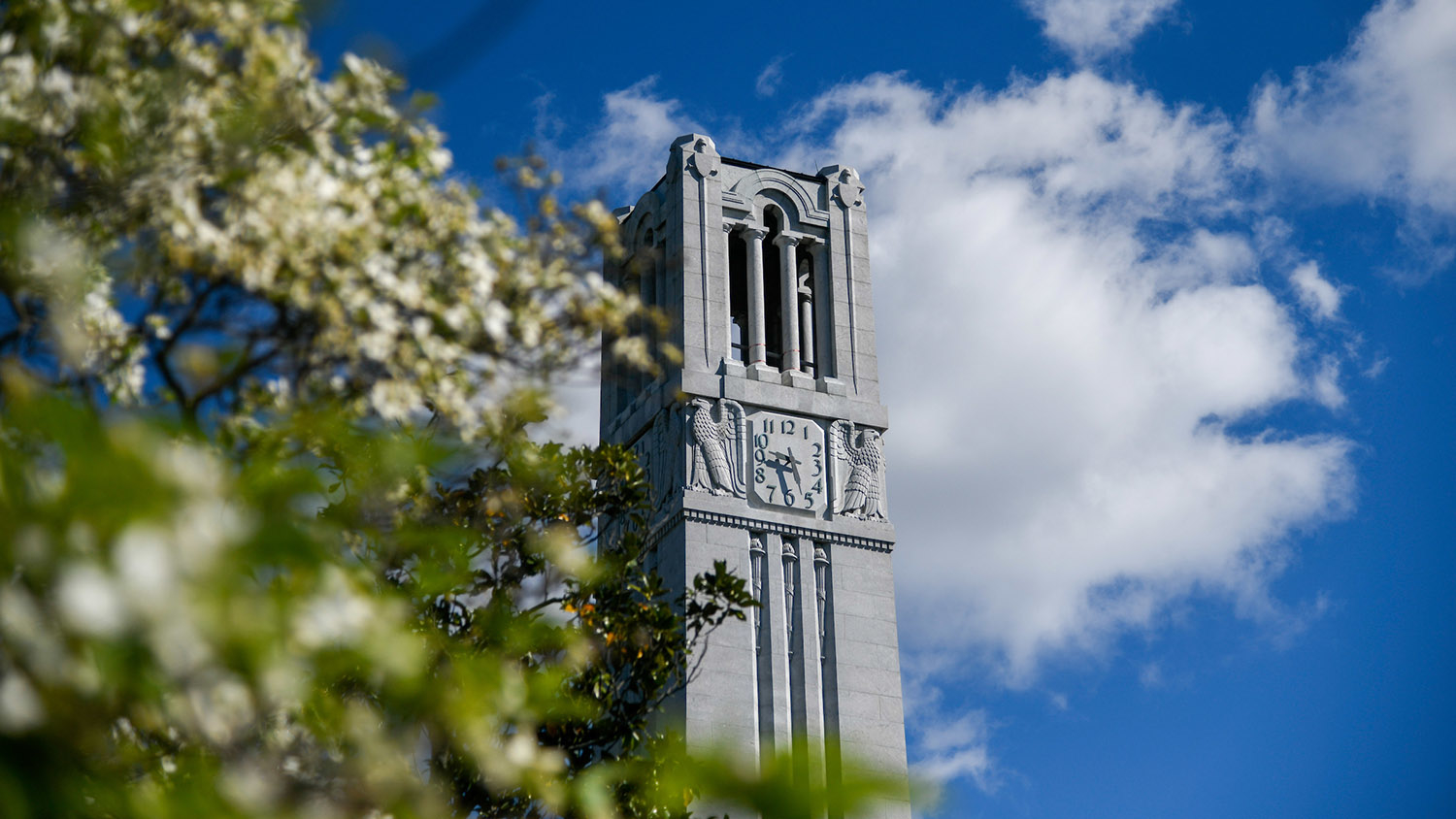 The NCState Belltower against a blue sky, with flowering trees in the foreground